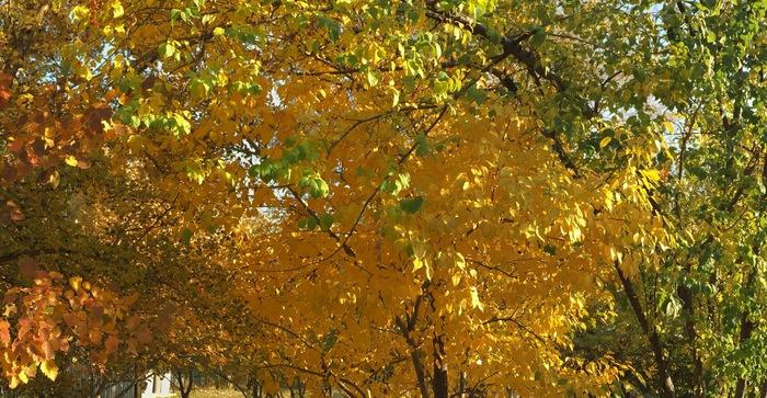 Градиентная осень Осень, Краски, Красота
