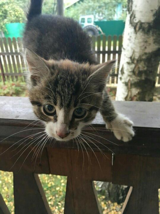 Кот в дар тверь