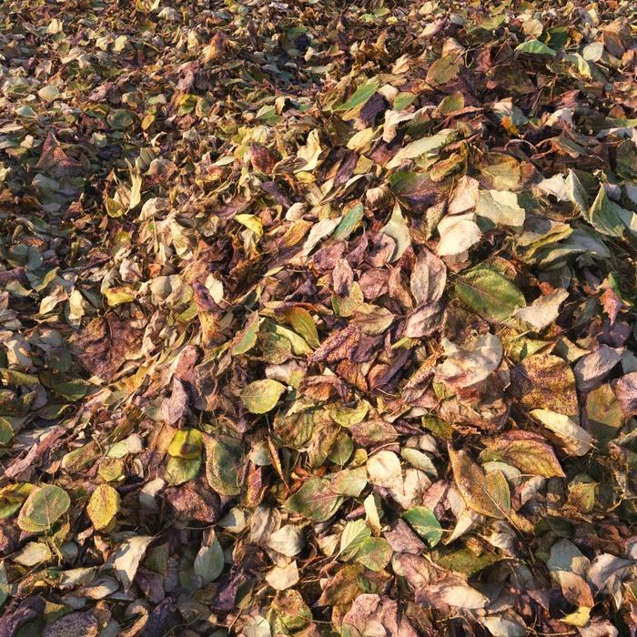 Текстура из того что было под ногами Листва, Осень, Листья, Тополь, Текстуры, Материал, 3D графика, Видео, Длиннопост