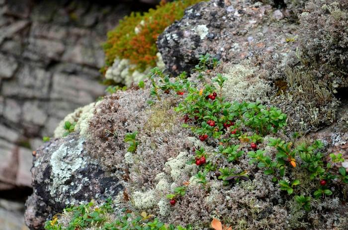 Пермский край, Колчимский камень... Руины гор Пермский край, Тайга, Фотография