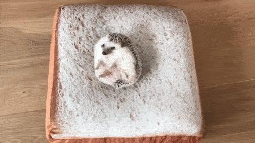 Когда проснулся на хлебе