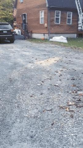 Это что там? Листья? Листья!