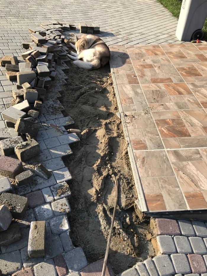 Устройство дренажа и отвод воды в брусчатке. Строительство, Брусчатка, Собака, Дренаж, Водосток, Длиннопост