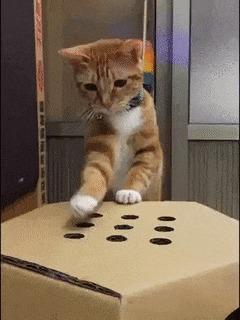 Домашняя система развлечений для кошек