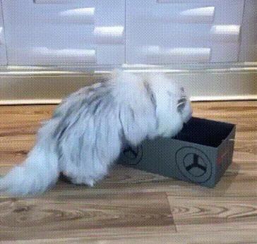 Как правильно ловить кота