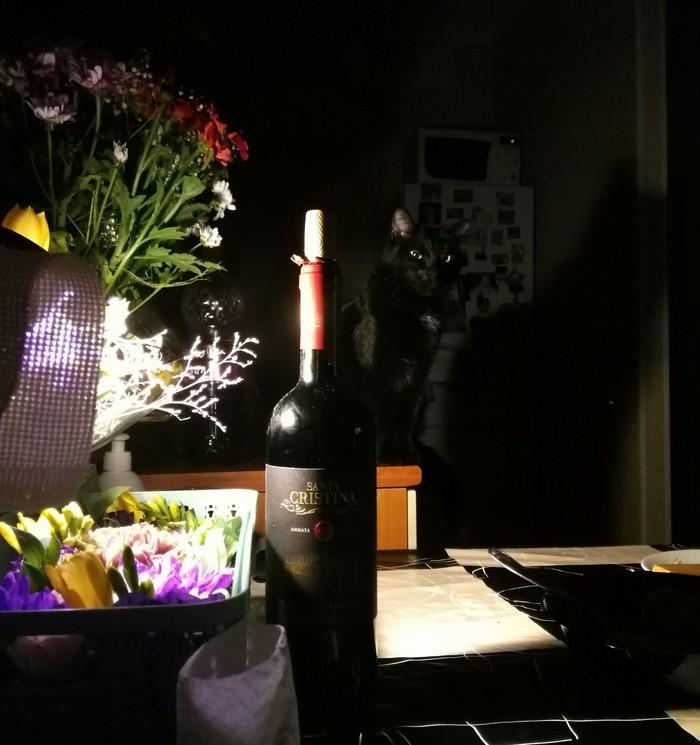 Моя котолампа. Кот, Цветы, Лампа, Праздники, День рождения