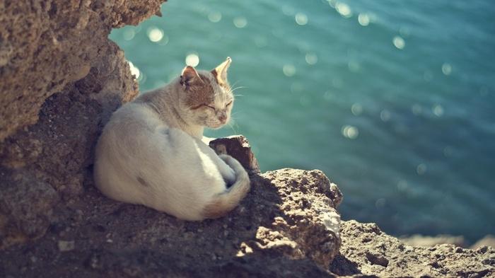 Опрос про путешествия Туризм, Путешествия, Море, Экскурсия, Гид, Опрос