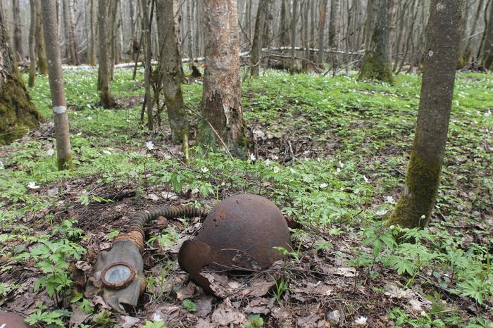 На волне постов о поиске бойцов... Великая Отечественная война, Память, Бойцы, Длиннопост