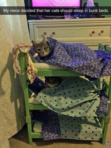 Моя племянница решила, что её коты должны спать на трёхъярусной кровати
