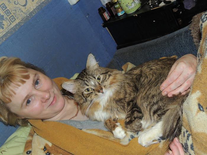 Мой любимый кошкарий Забота, Кот, Любовь, Питомец, Помощь, Животные, Длиннопост