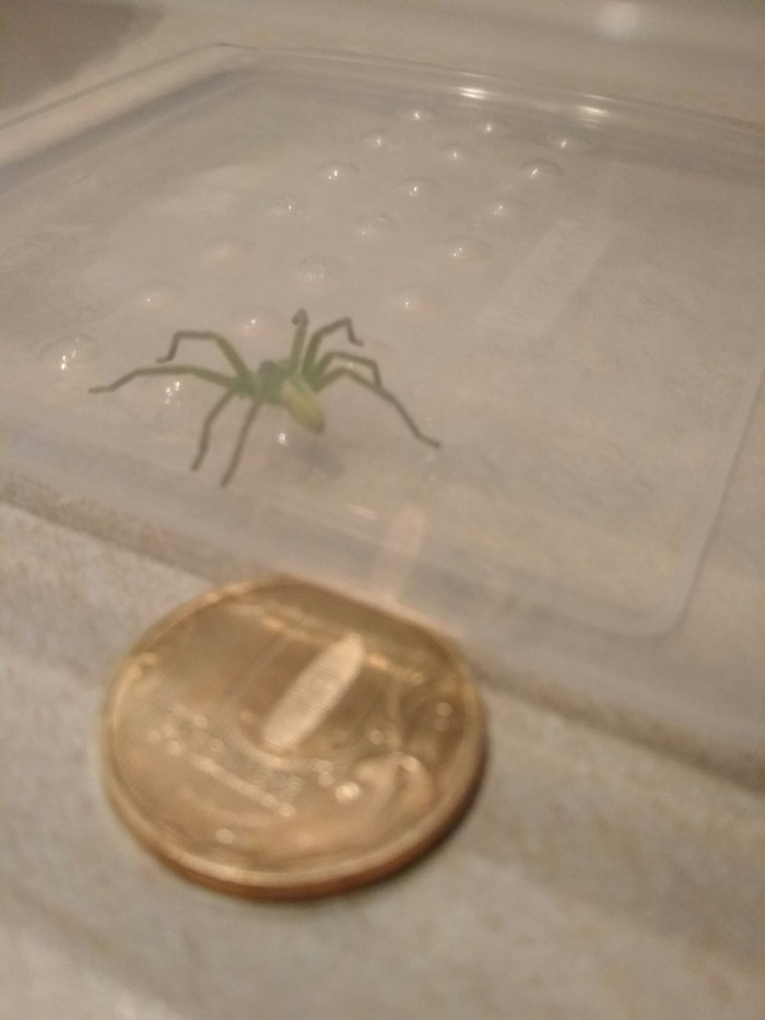 Пацаны, что за паук такой? Паук, Арахнофобия, Фотография, Длиннопост