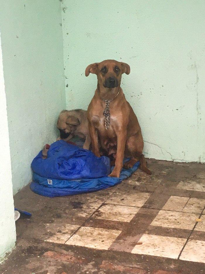 Молодая мать осталась без дома Собака, Бросили, Ищу дом, Москва, Пушкино, Помощь