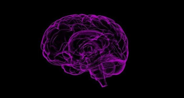 Болезнь Альцгеймера может зарождаться за пределами мозга? Наука, Альцгеймер, Мозг