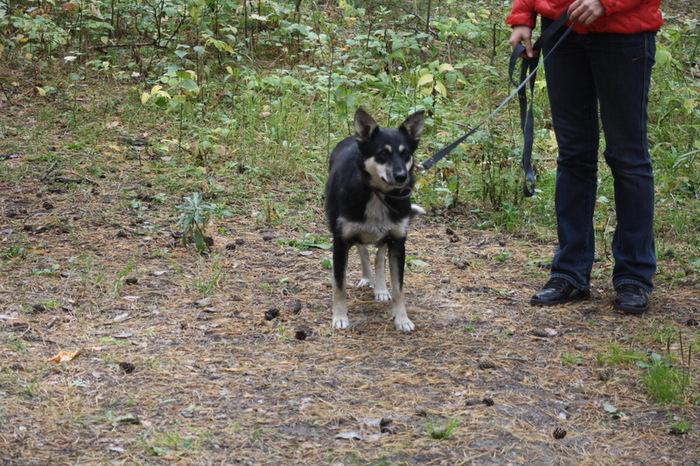 Собаки 2 Скорая помощь, Собака