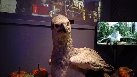Аниматроника из фильмов о Гарри Поттере и не только Гиппогриф, Клювокрыл, Аниматроника, Гарри Поттер, Музей, Мандрагора, Гринготтс, Чудовищная книга о чудовищах, Гифка, Длиннопост