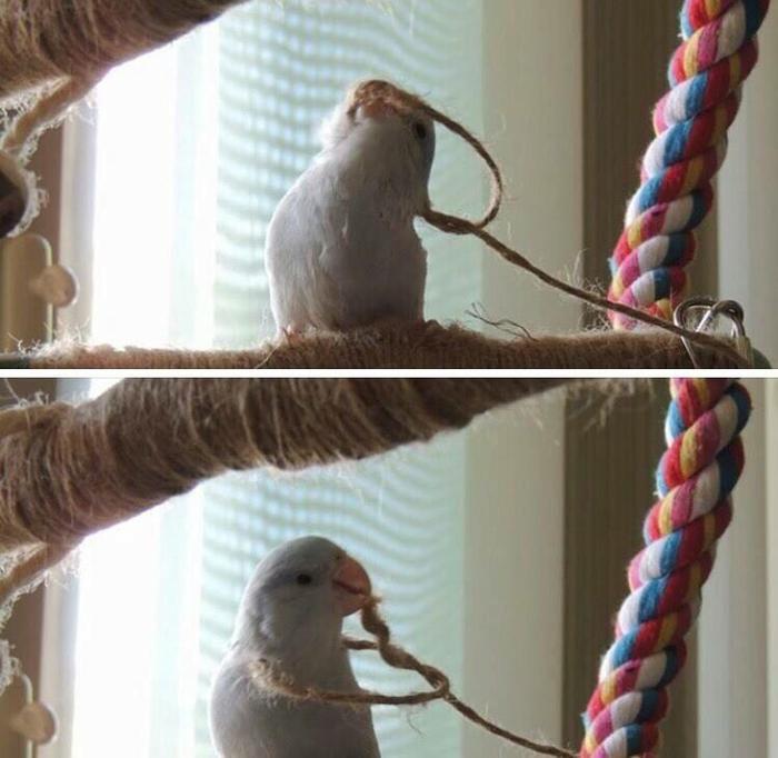 Когда ты только купил попугая, и он увидел в каких условиях ты живешь Попугай, Петля, Не мое, Картинки