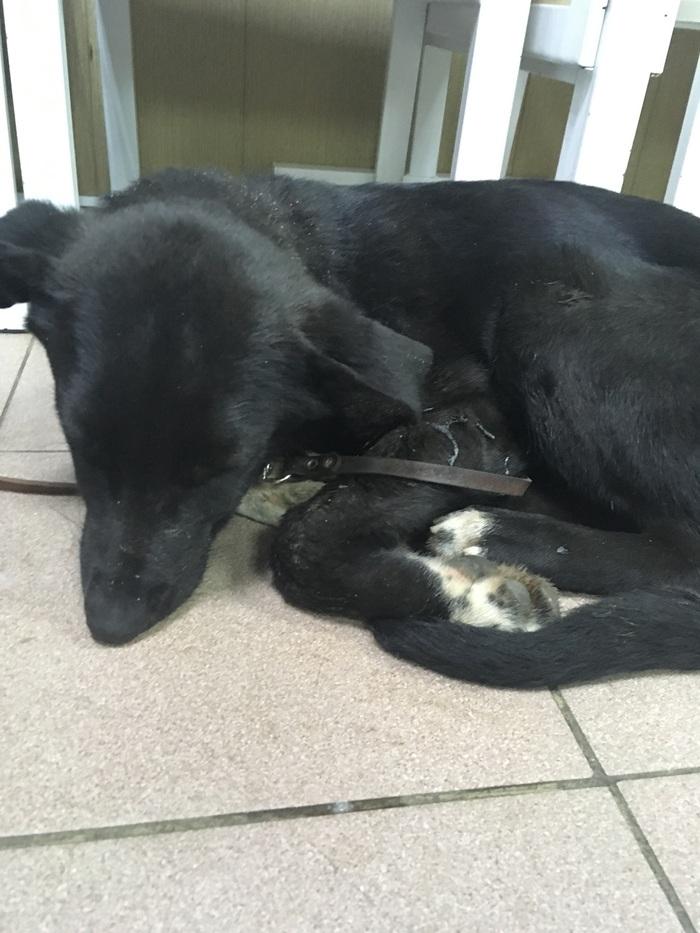 Подольск, отзовись! Найден пёсик Найдена собака, Собака, Длиннопост, Найдено животное