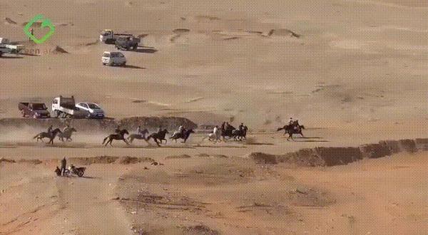 Казнить нельзя помиловать #4 Лошади, ДТП, Казнить нельзя помиловать, Алжир, Жандармерия, Бега, Гифка, Видео