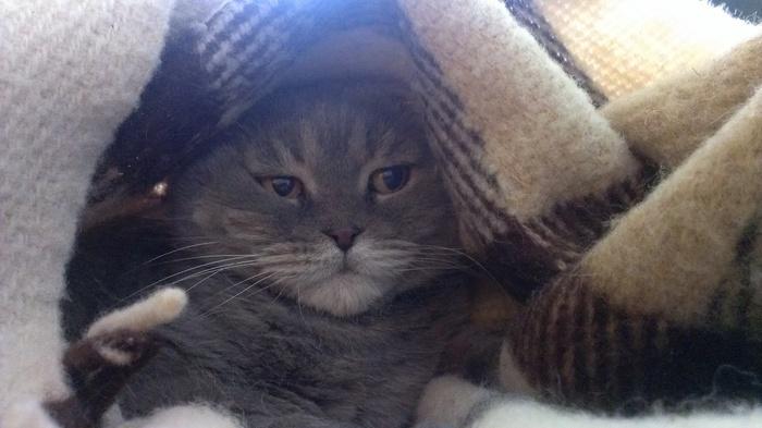 17 лет - полёт нормальный! )) Кот, Питомец, День рождения, Длиннопост
