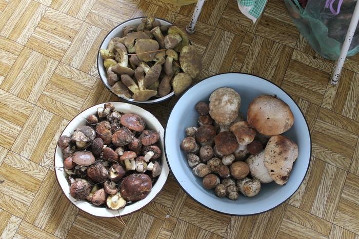 Мой самый удачный поход за грибами в этом сезоне) Грибы, Моё, Фотография, Белый гриб, Маслята, Зеленухи, Удача, Длиннопост