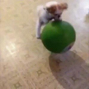 Собака Майкла Джордана