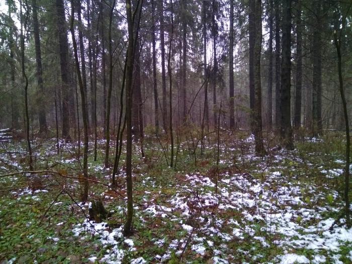 Обещанная странная находка в лесу лес, находка, нечто странное, длиннопост