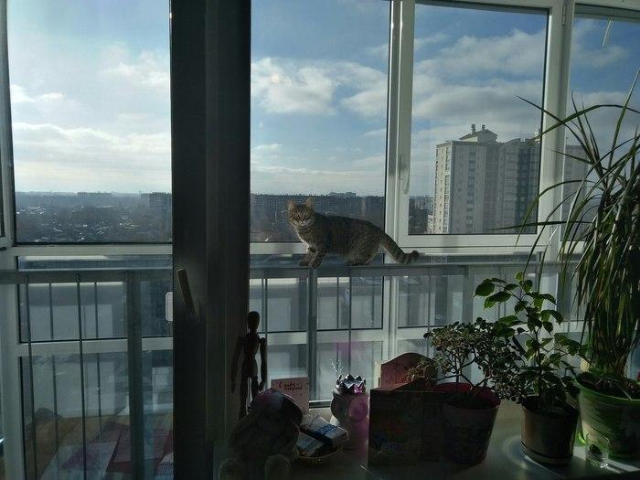 Кот на час Кот, Чужой кот, Балкон, Длиннопост