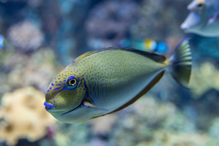 Живая рыба. Аквариум, Рыба, Сингапур, Сентоза, Длиннопост