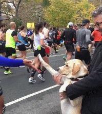 Наверное, я бы пробежал марафон ради такого :) Лапы, Собака, Марафон, Slow motion, Гифка