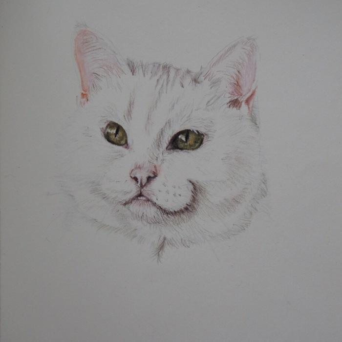 Котик. Цветные карандаши. Кот, Скетч