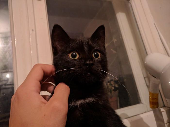 Плохие новости Кот, Домашние животные