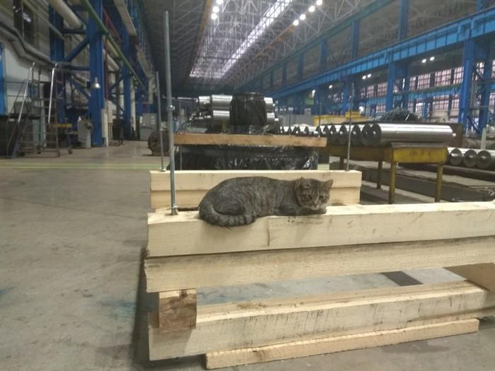 Суровый котик с завода.