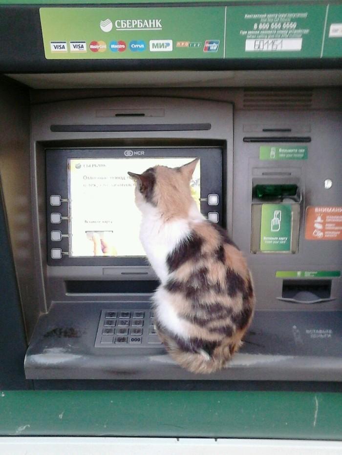 Кот забыл код.