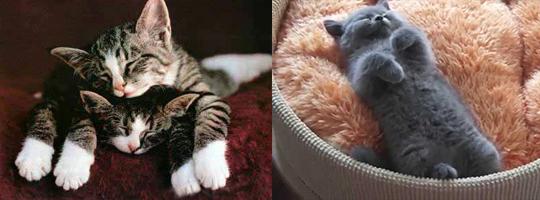 Котята очень мило спят, но только не мой Кот, Сон, Может, Смерть