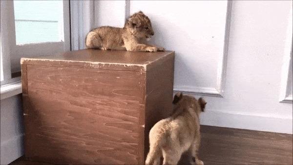 Как ты туда залез?