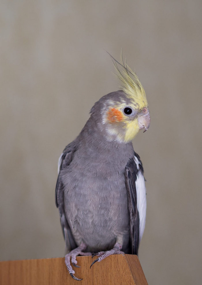 Птицы Домашние птицы, Птицы, Дикие птицы, Лечение птиц, Длиннопост