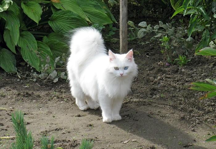 Каралевна прынцесса херцогинька