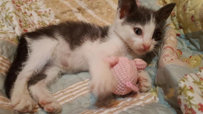 История о спасении одного котенка. Крит, спасение животных, длиннопост, кот