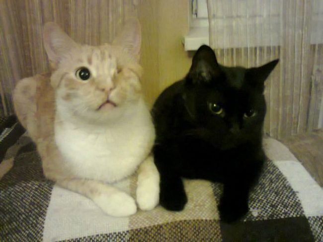 """""""Я сказала себе, что никогда и никого больше не возьму!"""" Но случился форс-мажор… кот, спасение животных, не мое, животные, добрые дела, добрые люди, помощь, длиннопост рис 4"""