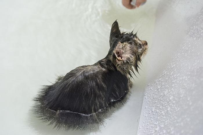 Купание маленького котика Кот, Котомафия, Мокрые киски, Длиннопост