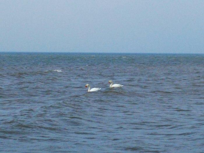 Все меняется, лишь море остается неизменным Балтийское море, Спокойствие, Природа, Моё, Первый длиннопост, Длиннопост
