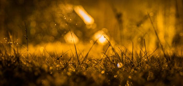 Дождливая осенняя ночь Осень, Дождь, Ночь, Клен, Canon 24-70, Длиннопост