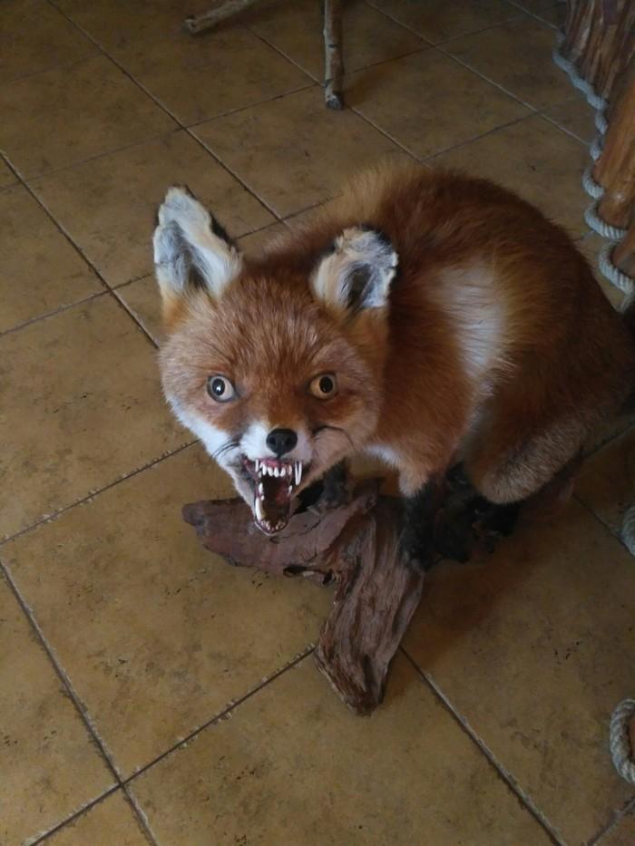 Самая страшная лиса картинки