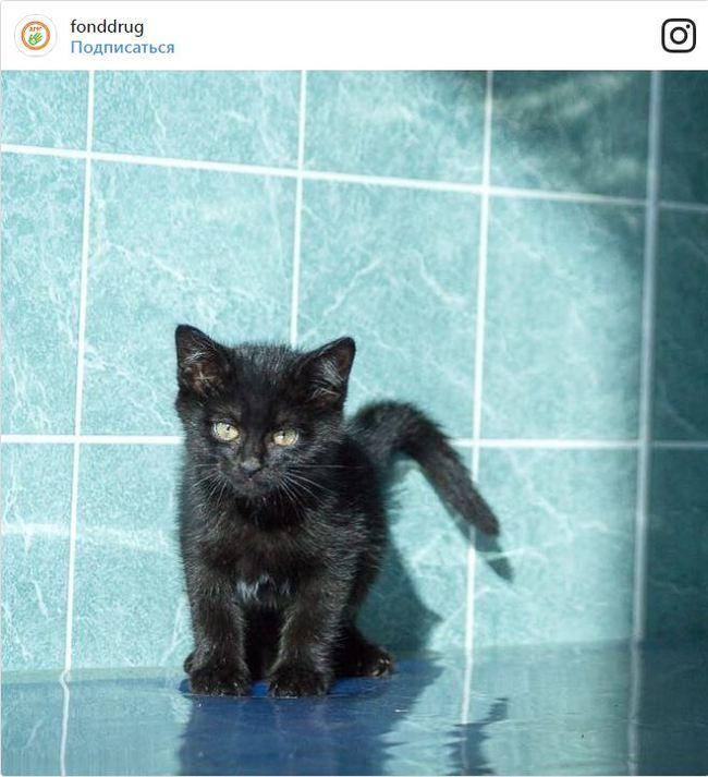 Если черный кот дорогу перейдет: необычный праздник 17 ноября Кот, Владивосток, Дальний восток, День кошек, Длиннопост