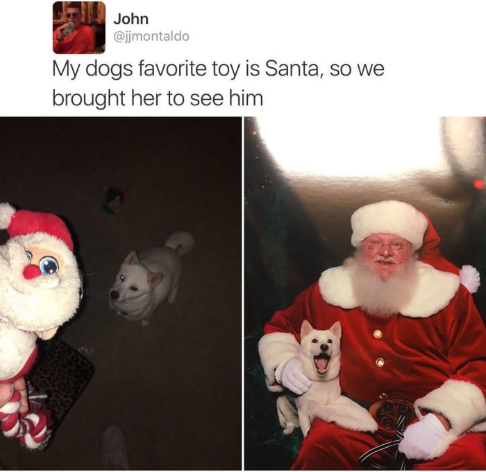 Любимая игрушка моей собаки - Санта, поэтому мы решили дать ей встретиться с настоящим