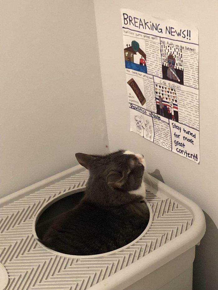 Дети нарисовали кошке газету, чтобы она читала её, когда ходит в туалет)) Кот, Туалет, Новости, Дети, Не скучно