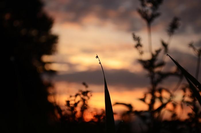 Сумеречная подборка Фотография, Ночь, Утро, Nikon d3100, Nikon, Природа, Дикая природа, Сумерки, Длиннопост