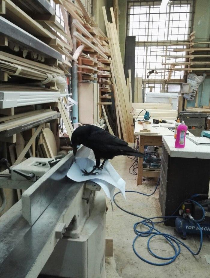 Кровать-чердак, от идеи до воплощения в жизнь)) Часть 1. длиннопост, ремонт, своими руками, Кровать, чердак, Строительство