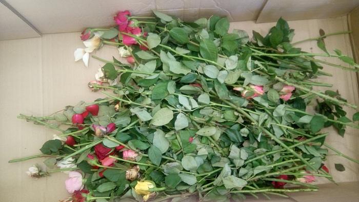 Низким ценам строим магазин цветов желтыми розами синими