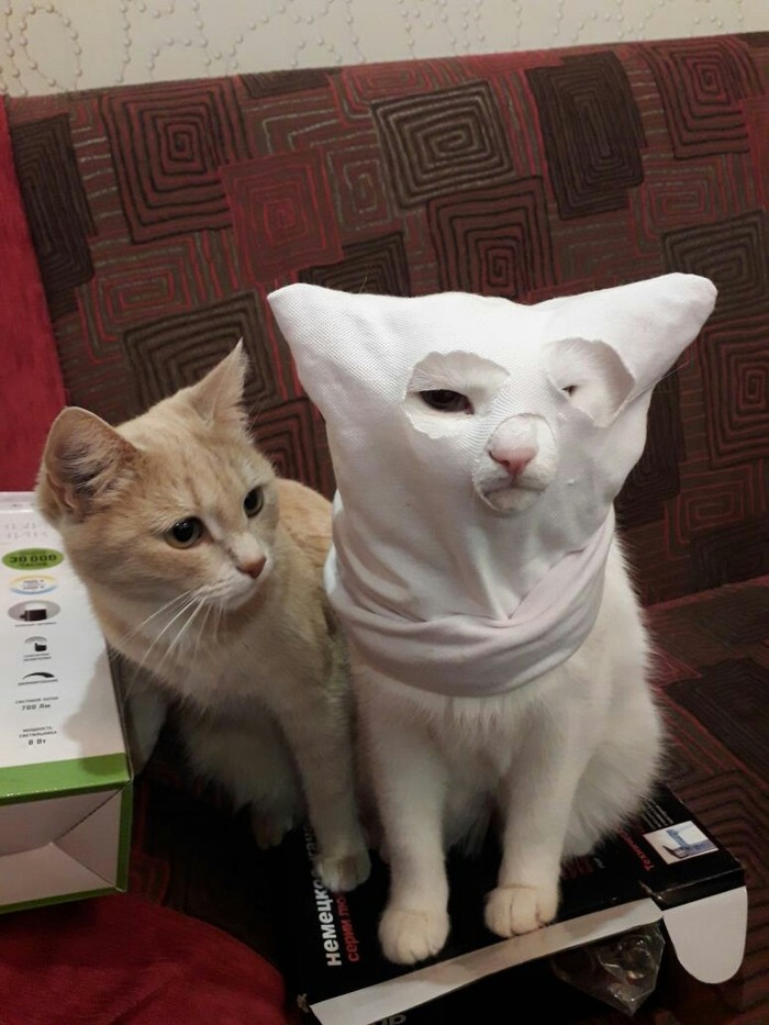 Кошачий ку-клукс-клан Кот, Ку-Клукс-Клан